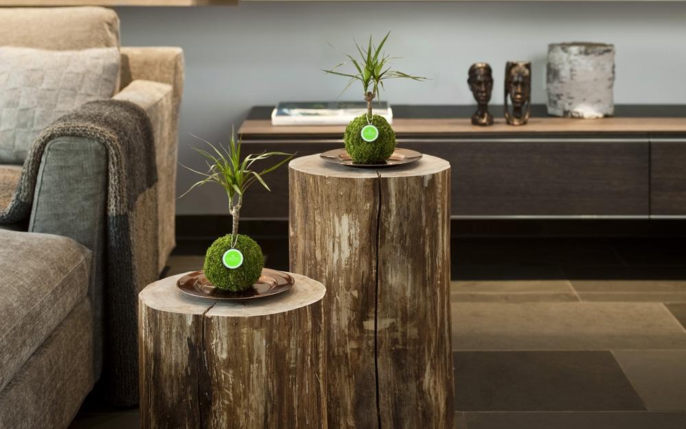 kibonu das gl cksb umchen lifestyle und design. Black Bedroom Furniture Sets. Home Design Ideas